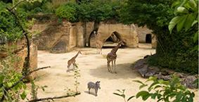 Zoo de Doué la Fontaine